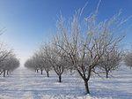 """ITAP Albacete espera """"gran disparidad"""" en la evolución de los cultivos de la provincia tras las nevadas y heladas"""